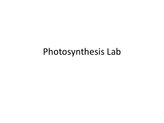 Photosynthesis Lab