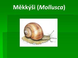 Měkkýši ( Mollusca )