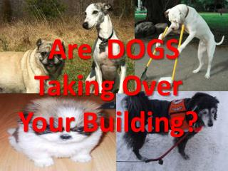 Are  DOGS Taking Over  Your Building?