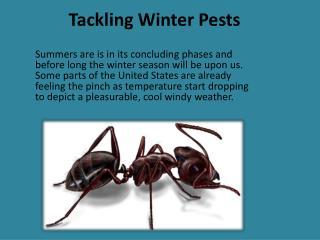 Tackling Winter Pests