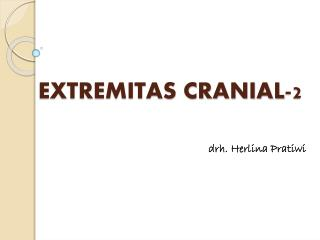 EXTREMITAS CRANIAL -2