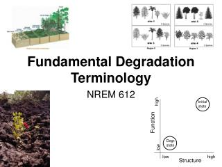 Fundamental Degradation Terminology