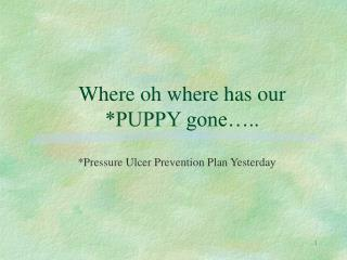 Where oh where has our *PUPPY gone…..