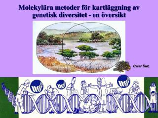 Molekyl ra metoder f r kartl ggning av genetisk diversitet - en  versikt