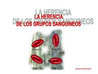 LA HERENCIA  DE LOS GRUPOS SANGUINEOS
