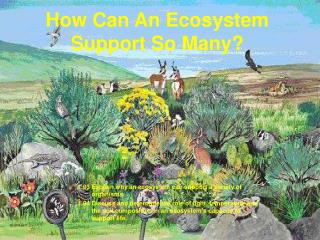 How Can An Ecosystem Support So Many?