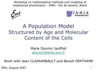 A Population Model  Structured by Age and Molecular Content of the Cells