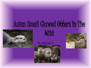 Asian Small Clawed Otters In The Wild