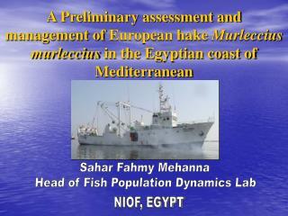 Sahar Fahmy Mehanna  Head of Fish Population Dynamics Lab