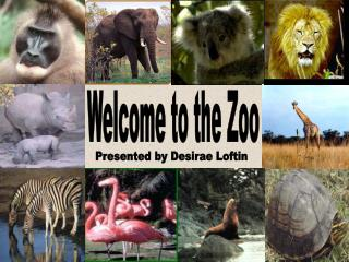Welcome to the Zoo- A Powerpoint Presentation