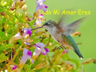 Todo Mi Amor Eres Tu