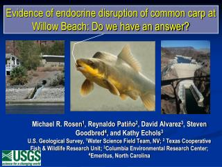 Evidence of endocrine disruption of common carp at Willow Beach: Do we have an answer?