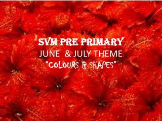 "SVM PRE PRIMARY  JUNE  & JULY THEME ""COLOURS & SHAPES"""