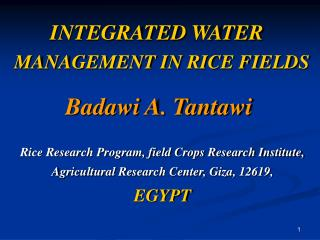 INTEGRATED WATER   MANAGEMENT IN RICE FIELDS