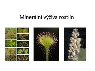 Minerální výživa rostlin