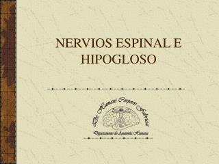NERVIOS ESPINAL E HIPOGLOSO