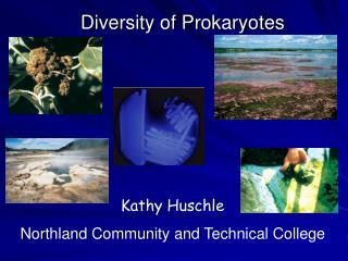 Diversity of Prokaryotes