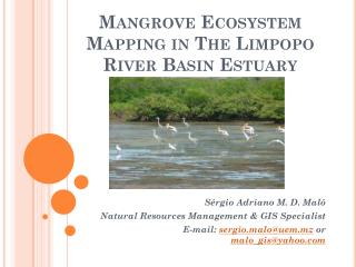 Mangrove Ecosystem Mapping in The Limpopo River Basin Estuary