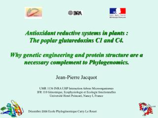 Antioxidant reductive systems in plants : The poplar glutaredoxins C1 and C4.