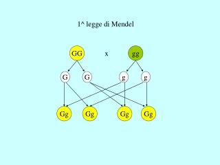 1^ legge di Mendel