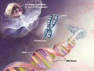 NUCLEIC ACIDS (DNA and RNA)