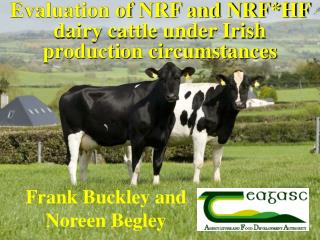 Evaluation of NRF and NRF*HF dairy cattle under Irish production circumstances