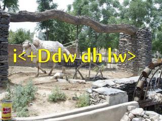 i <+ Ddw  dh  lw >