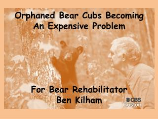 Orphaned Bear Cubs Becoming A n Expensive Problem  For  Bear Rehabilitator  Ben  Kilham