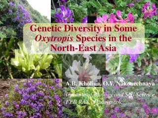 Genetic Diversity in Some Oxytropis Species in the North-East Asia