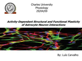Activity-Dependent Structural and Functional Plasticity of Astrocyte-Neuron Interactions