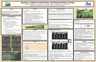 MICROBIAL DYNAMICS IN CONVENTIONAL AND ORGANIC MANAGED SYSTEMS