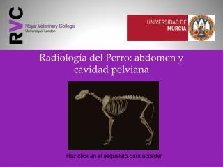 Radiolog�a del Perro: abdomen y  cavidad pelviana