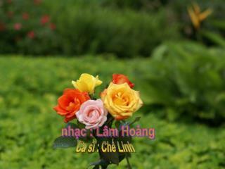 nhạc : Lâm Hoàng