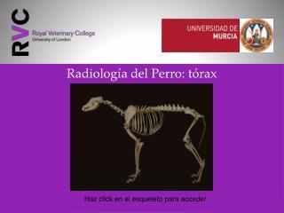 Radiología del Perro: tórax