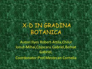 X-D IN GRADINA BOTANICA