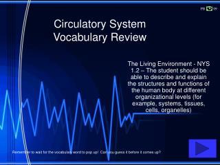 Circulatory System Vocabulary Review