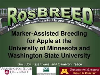Marker-Assisted Breeding for Apple at the  University of Minnesota and Washington State University