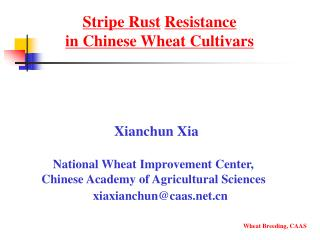 Stripe Rust Resistance  in Chinese Wheat Cultivars