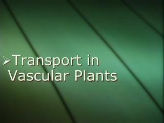 Transport in Vascular Plants