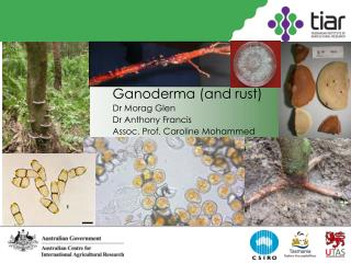 Ganoderma (and rust) Dr Morag Glen Dr Anthony Francis Assoc. Prof. Caroline Mohammed