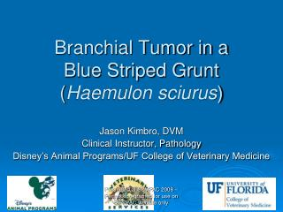 Branchial Tumor in a  Blue Striped Grunt ( Haemulon sciurus )