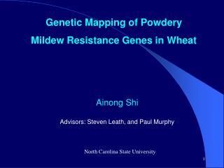 Genetic Mapping of Powdery Mildew Resistance Genes in Wheat