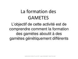La formation des GAMETES