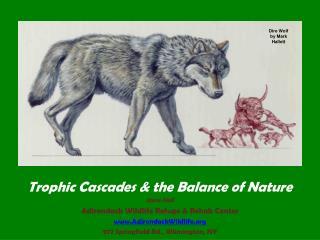 Trophic Cascades & the Balance of Nature Steve Hall Adirondack Wildlife Refuge & Rehab Center