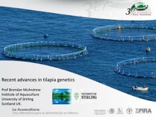 Recent advances in tilapia genetics Prof Brendan McAndrew Institute of Aquaculture