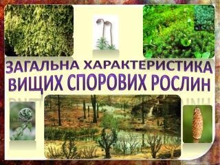 Загальна характеристика вищих спорових рослин