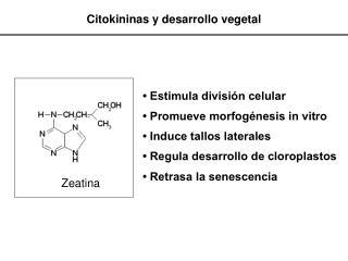 Citokininas y desarrollo vegetal