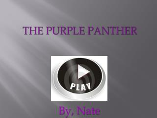 The Purple panther