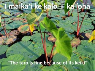 �The taro is  fine  because of its keiki�