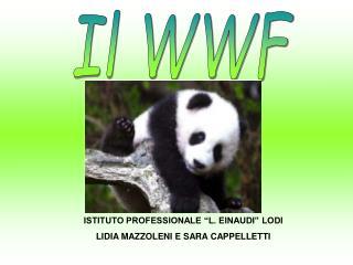 Il WWF